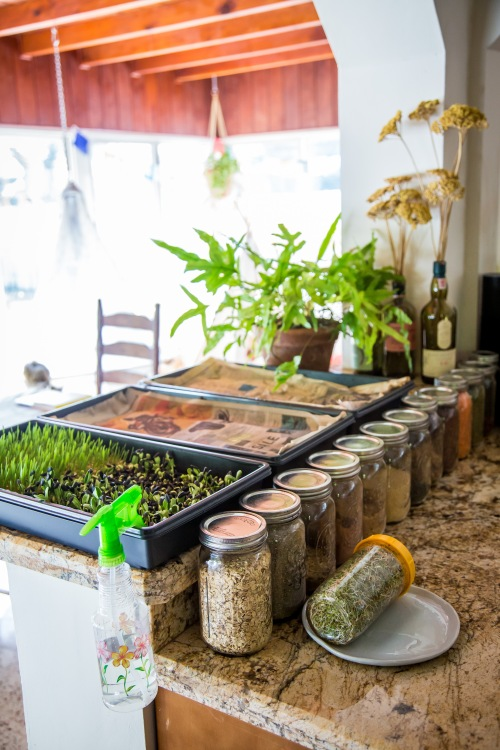 kitchen counter with mason jars and indoor garden